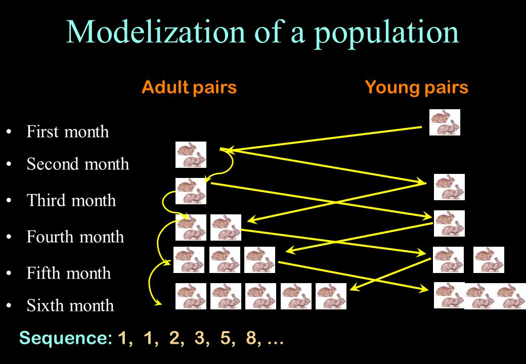 Modelization of a population