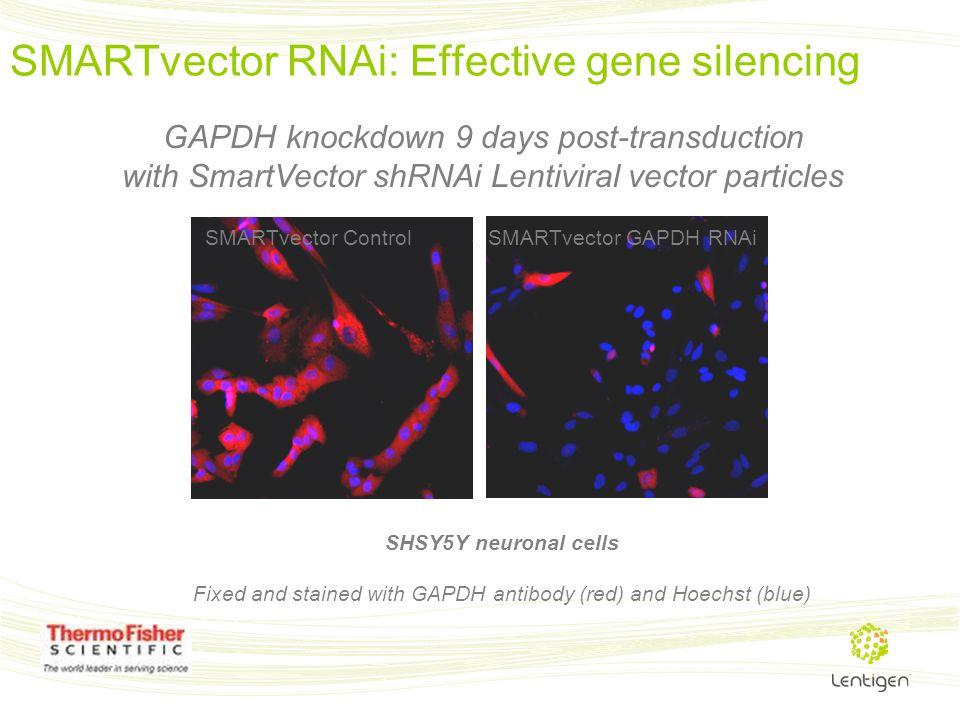 SMARTvector RNAi: Effective gene silencing