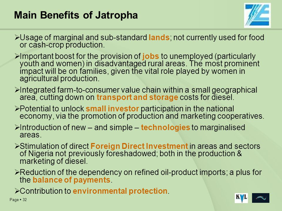 Main Benefits of Jatropha
