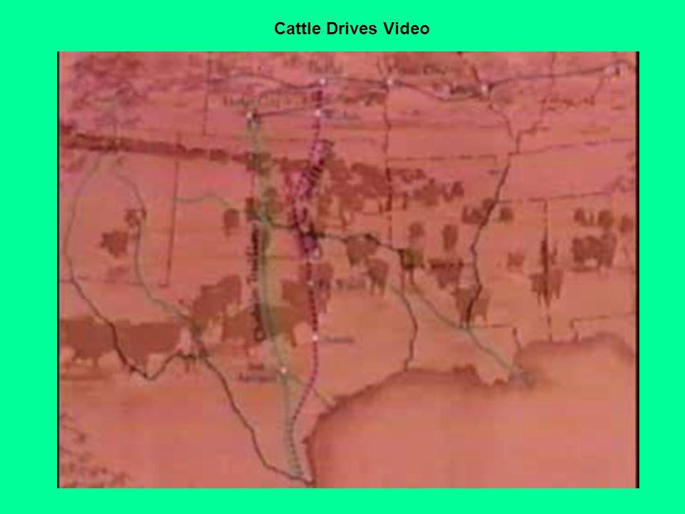 Cattle Drives Video