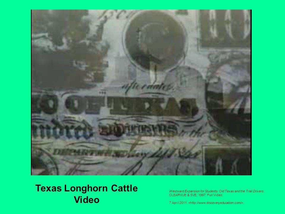 Texas Longhorn Cattle Video