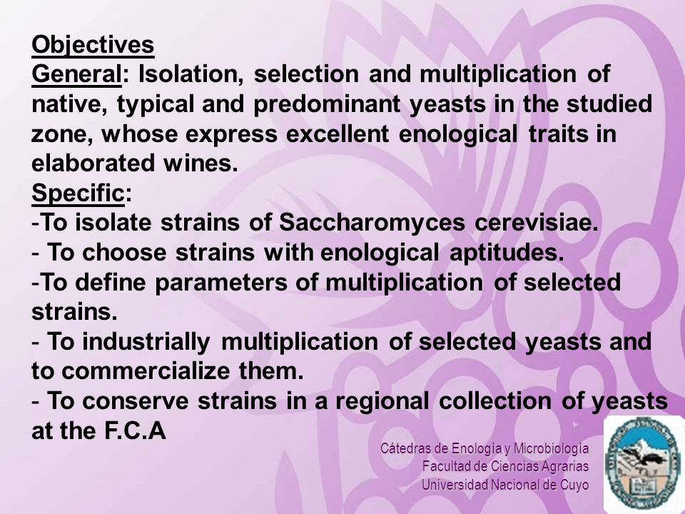 To isolate strains of Saccharomyces cerevisiae.