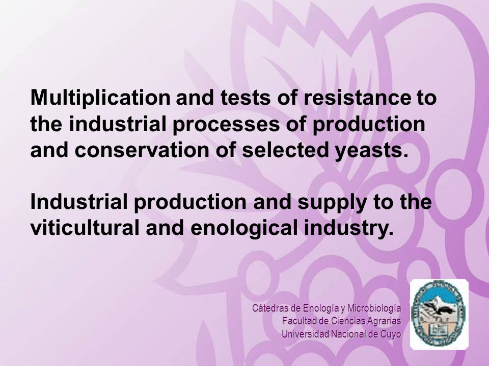 Multiplication and tests of resistance to the industrial processes of production and conservation of selected yeasts.