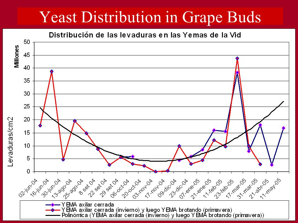 Yeast Distribution in Grape Buds
