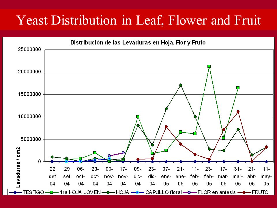 Yeast Distribution in Leaf, Flower and Fruit