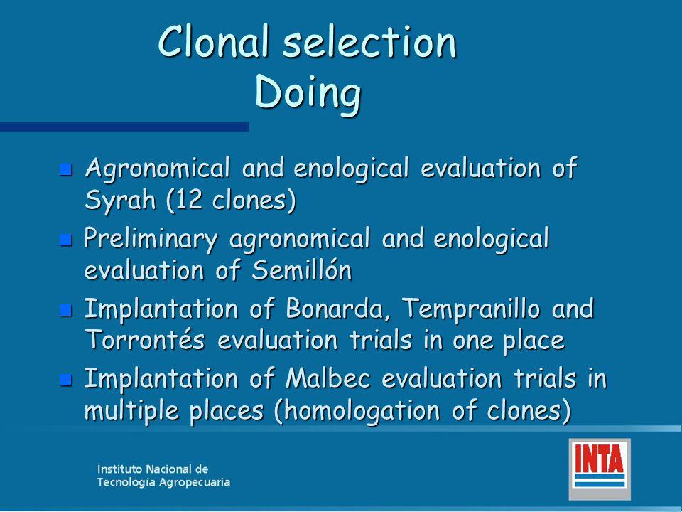 Clonal selection Doing