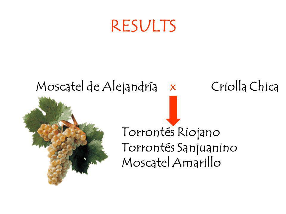 RESULTS Moscatel de Alejandría x Criolla Chica Torrontés Riojano