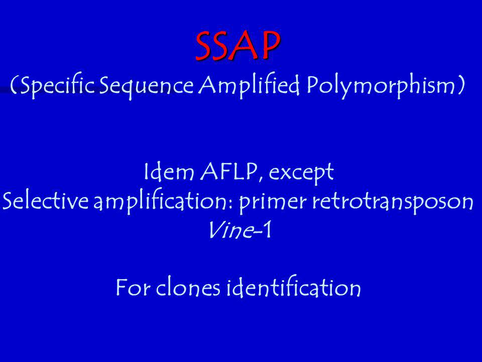 SSAP (Specific Sequence Amplified Polymorphism) Idem AFLP, except