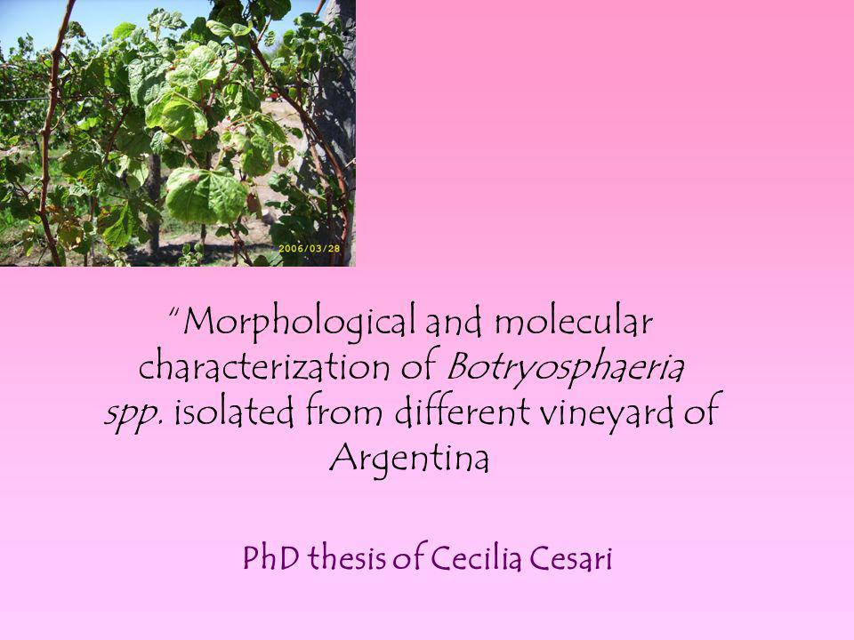 PhD thesis of Cecilia Cesari