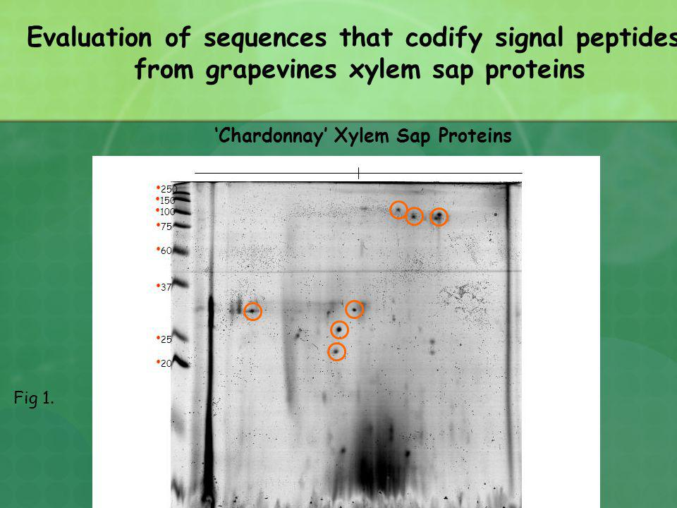 Evaluation of sequences that codify signal peptides