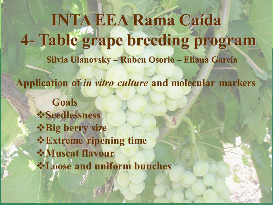 4- Table grape breeding program