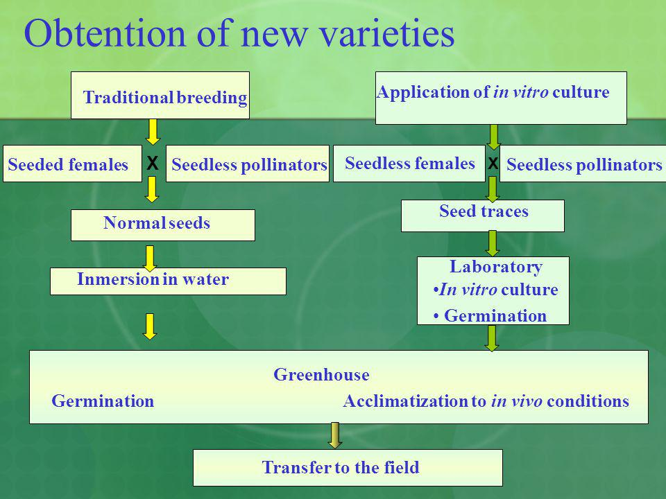 Obtention of new varieties