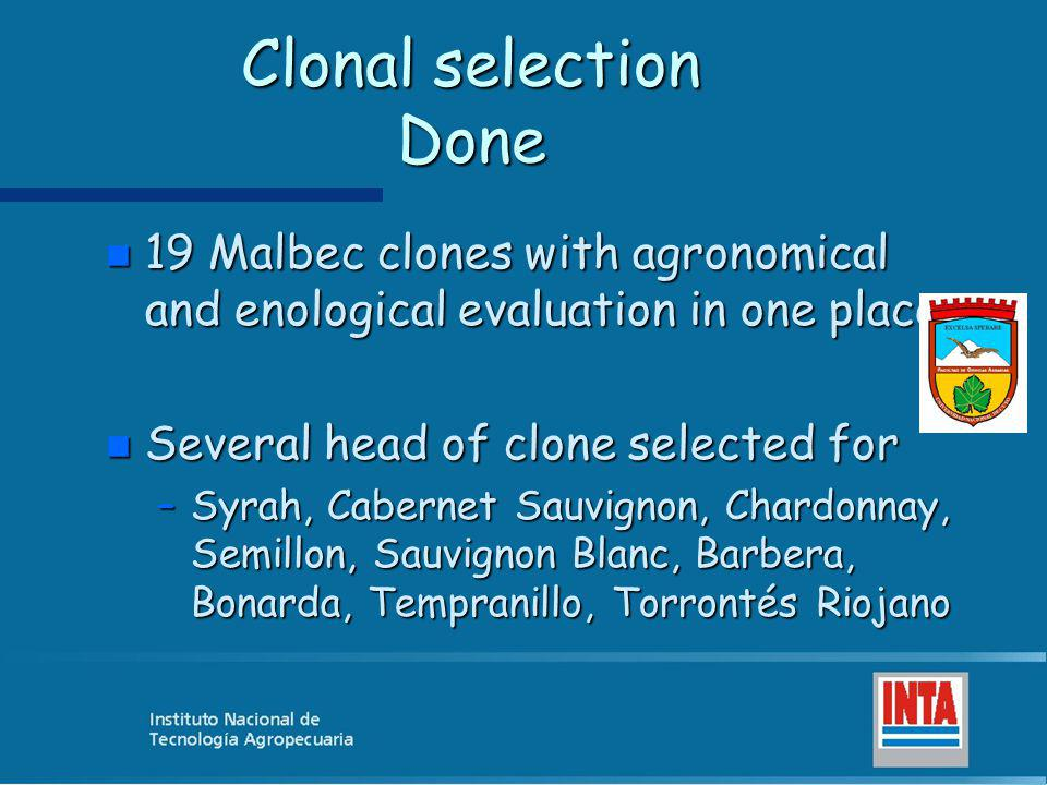 Clonal selection Done 19 Malbec clones with agronomical and enological evaluation in one place. Several head of clone selected for.