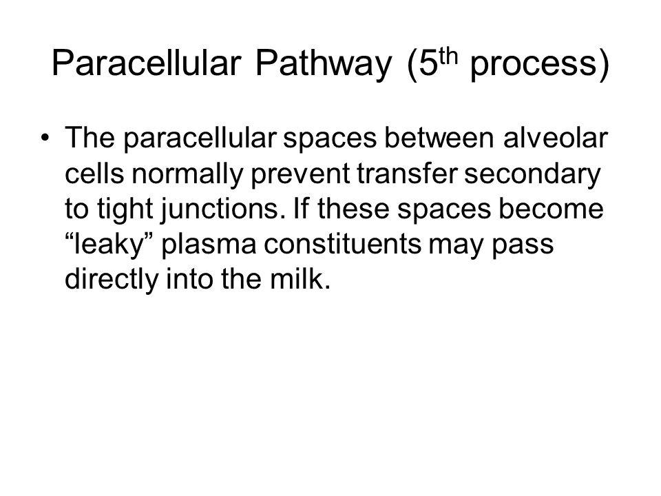 Paracellular Pathway (5th process)