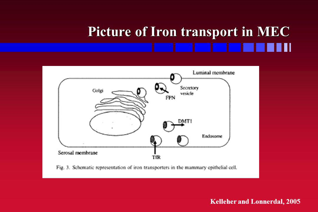 Picture of Iron transport in MEC