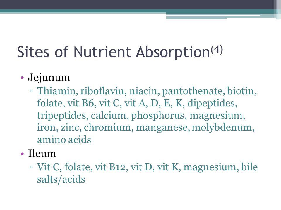Sites of Nutrient Absorption(4)