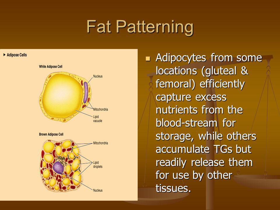 Fat Patterning