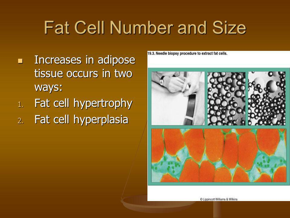 Fat Cell Number and Size