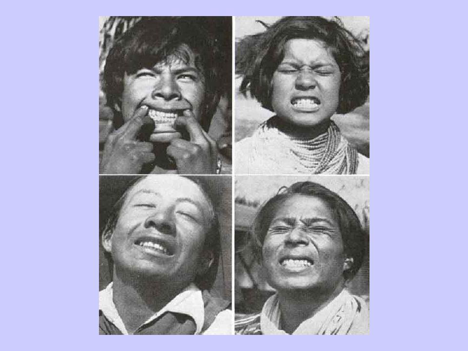 Primitive Seminoles