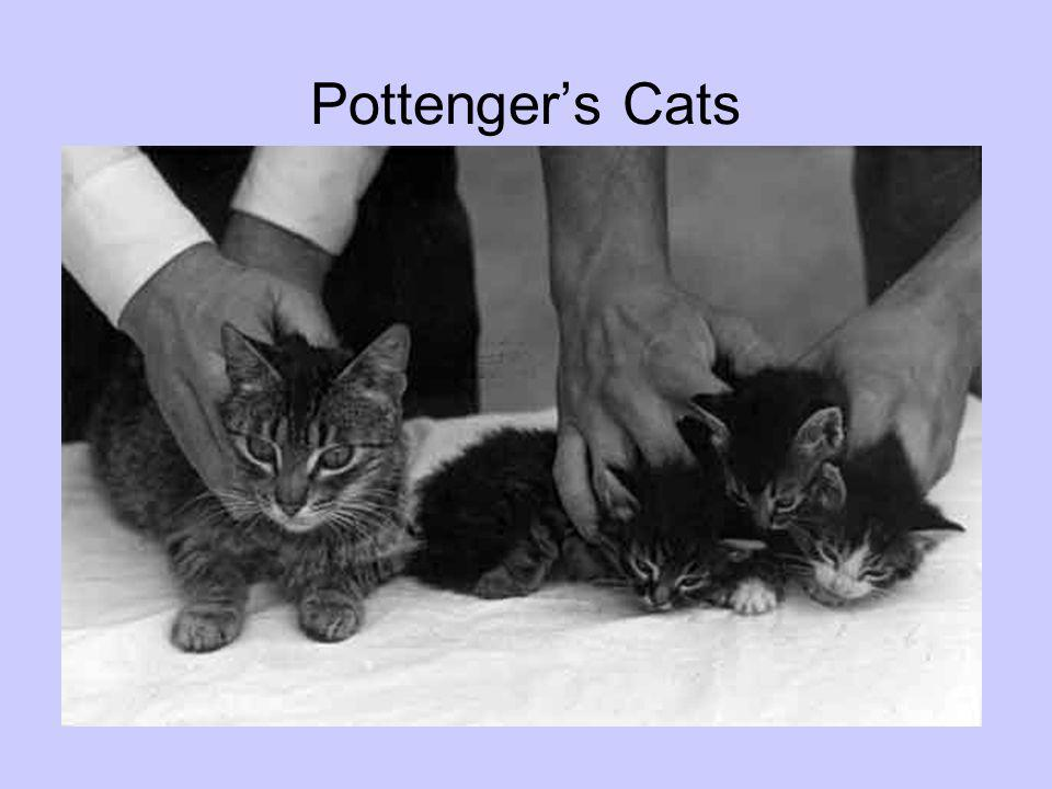 Pottenger's Cats