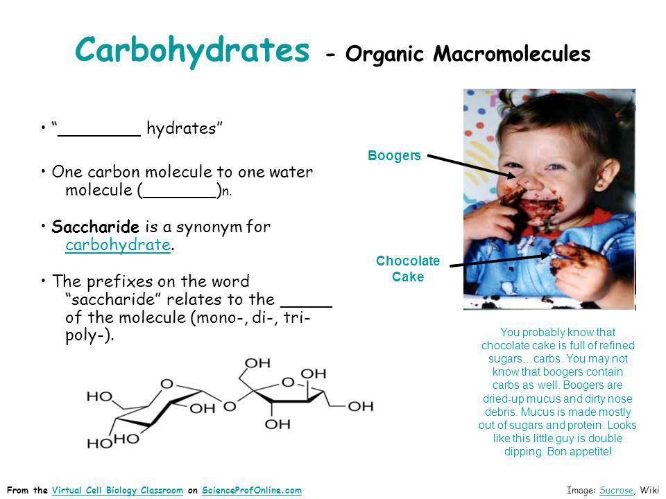 Carbohydrates - Organic Macromolecules