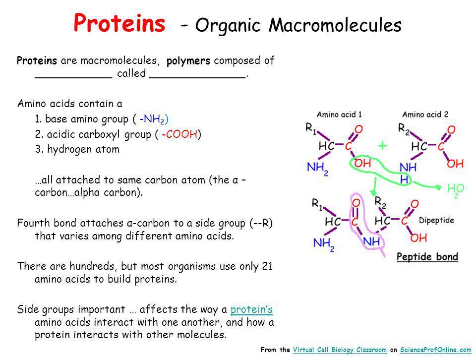 Proteins - Organic Macromolecules