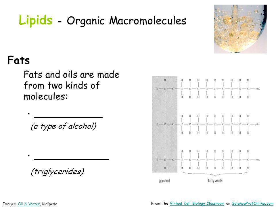 Lipids - Organic Macromolecules