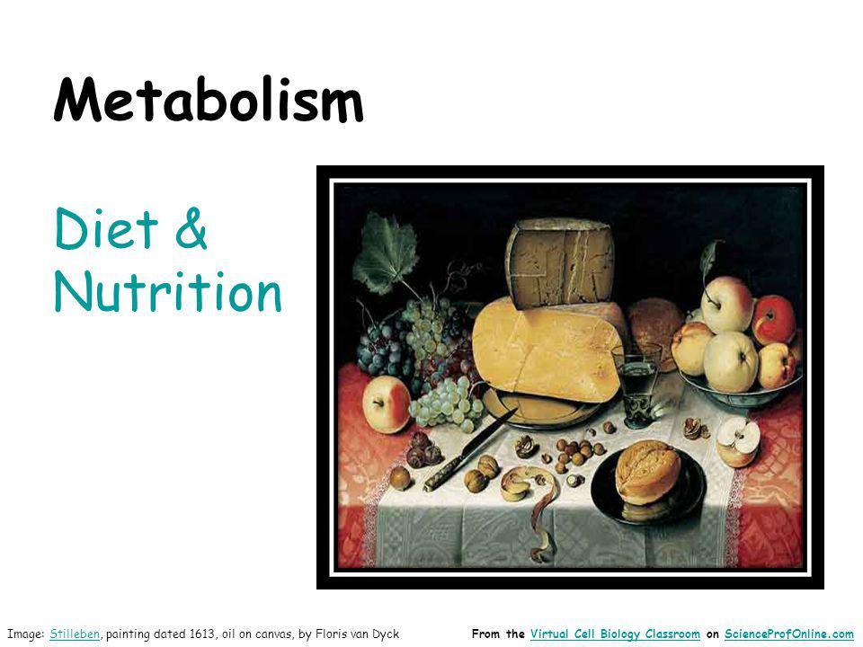 Metabolism Diet & Nutrition