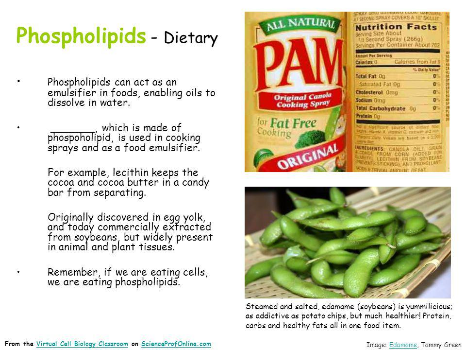 Phospholipids - Dietary