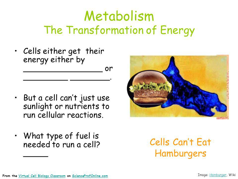 Metabolism The Transformation of Energy