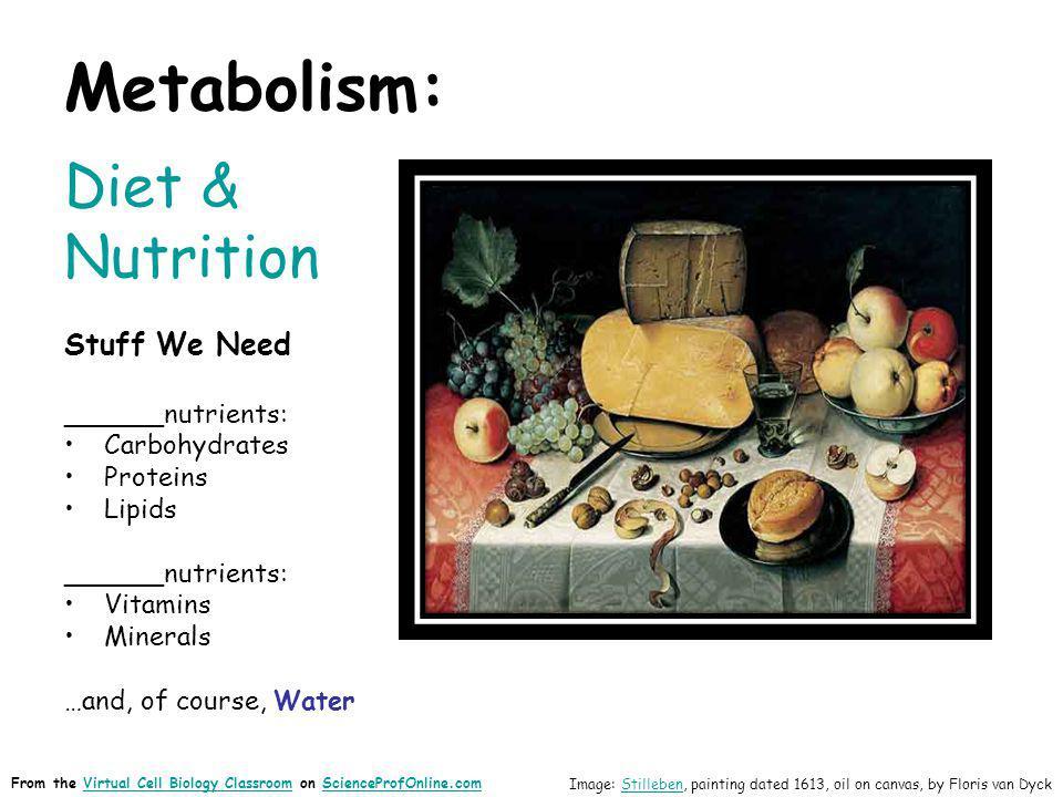 Metabolism: Diet & Nutrition