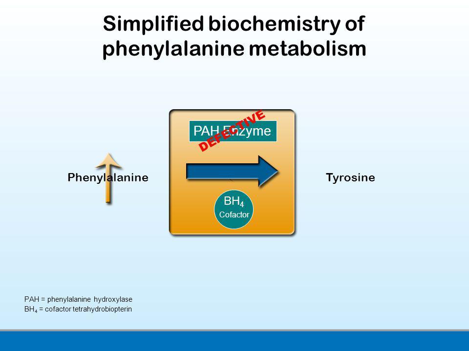 Simplified biochemistry of phenylalanine metabolism