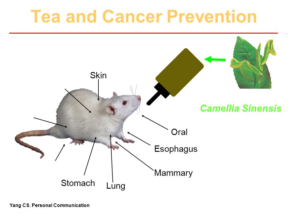 Tea and Cancer Prevention
