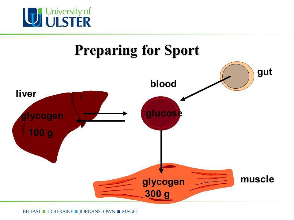 Preparing for Sport gut blood liver glucose 100 g muscle glycogen