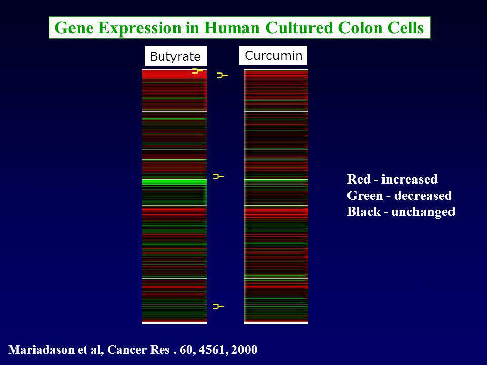 Gene Expression in Human Cultured Colon Cells