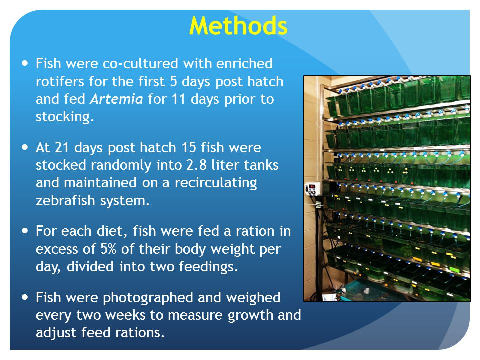 Methods Fish were co-cultured with enriched rotifers for the first 5 days post hatch and fed Artemia for 11 days prior to stocking.