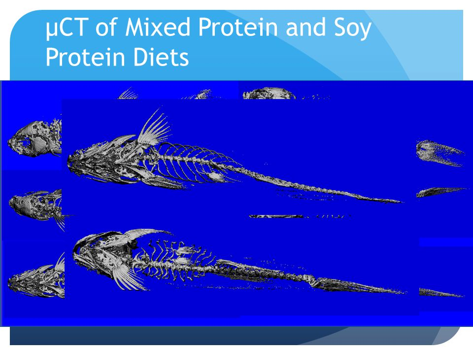 µCT of Mixed Protein and Soy Protein Diets