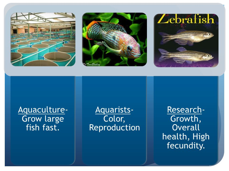 Aquaculture-Grow large fish fast. Aquarists-Color, Reproduction