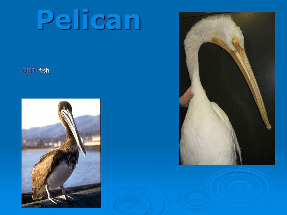 Pelican DIET: fish