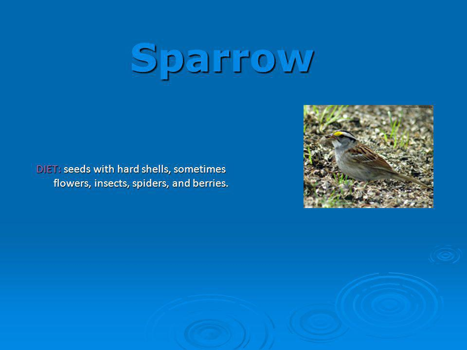 Sparrow DIET: seeds with hard shells, sometimes flowers, insects, spiders, and berries.