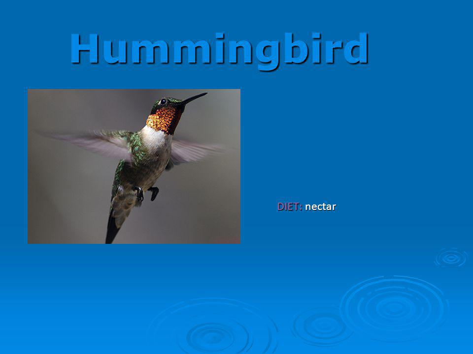Hummingbird DIET: nectar