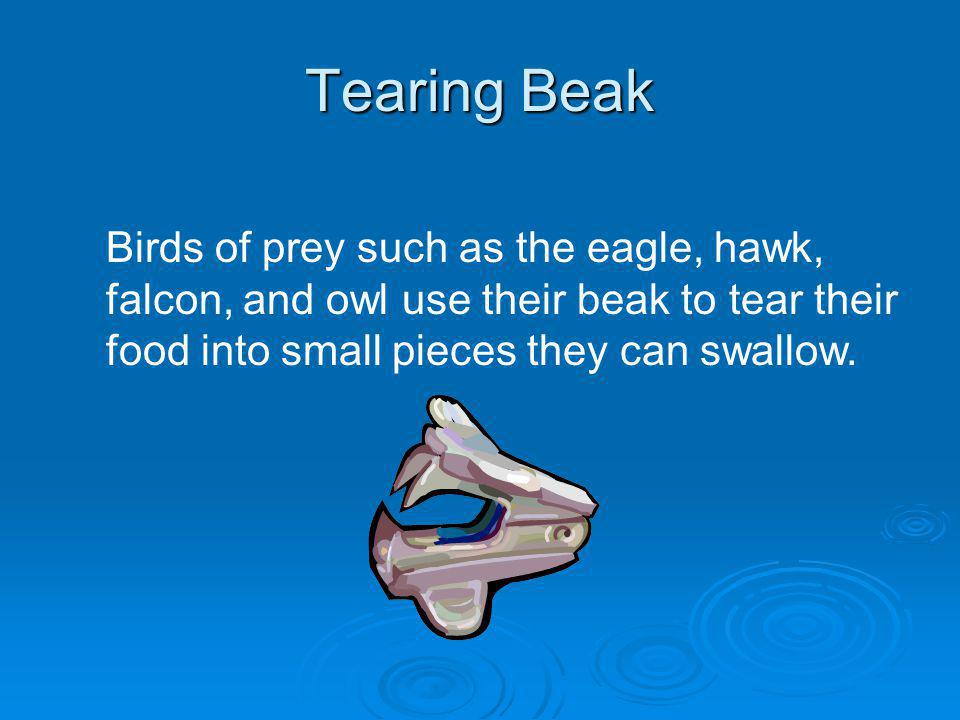 Tearing Beak Birds of prey such as the eagle, hawk, falcon, and owl use their beak to tear their food into small pieces they can swallow.