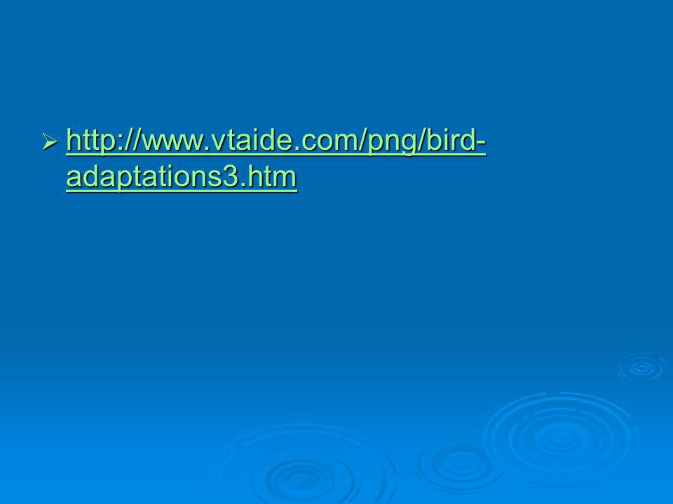 http://www.vtaide.com/png/bird-adaptations3.htm