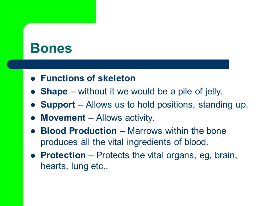 Bones Functions of skeleton