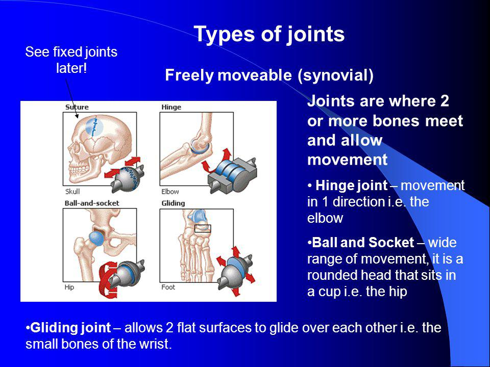 Freely moveable (synovial)