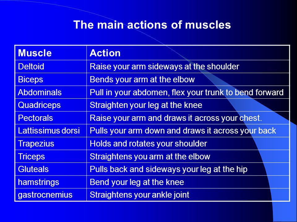 The main actions of muscles