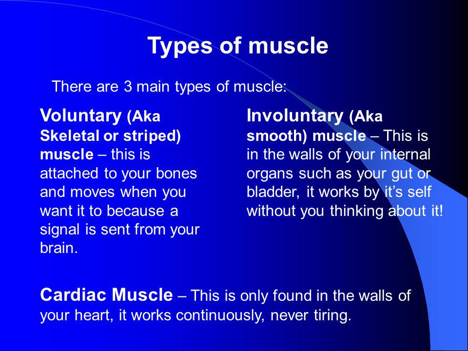 Types of muscle There are 3 main types of muscle: