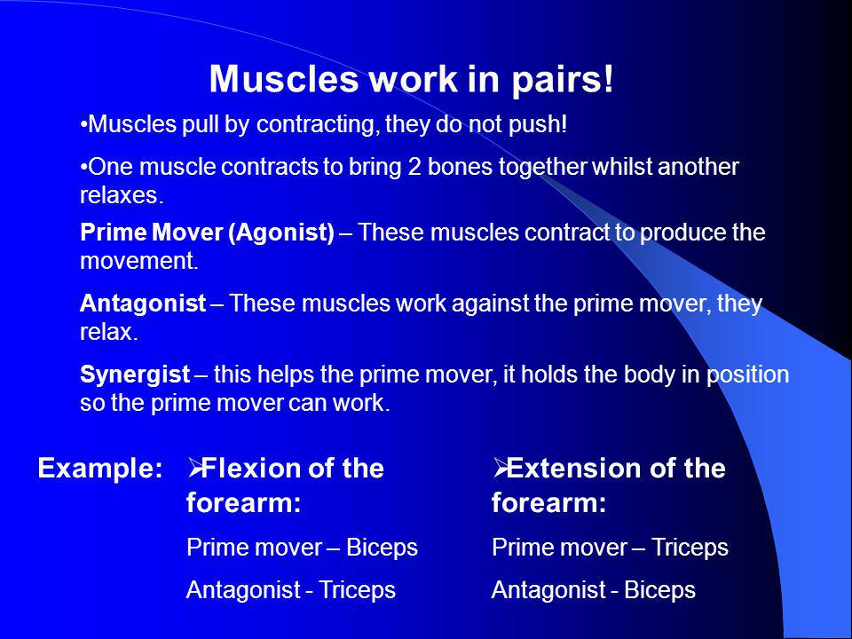 Muscles work in pairs! Example: Flexion of the forearm: