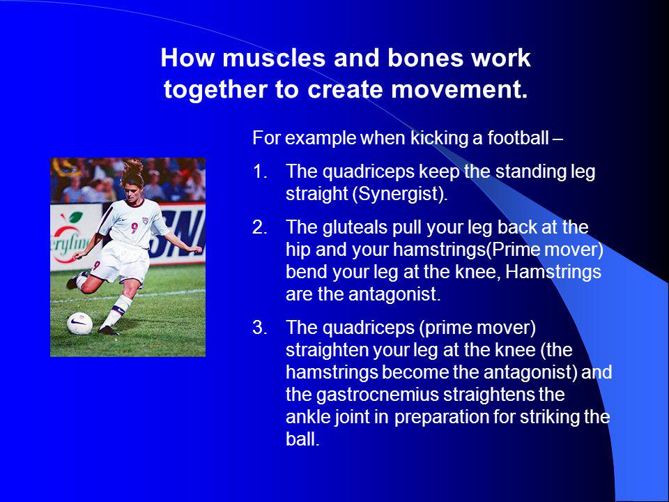 How muscles and bones work together to create movement.