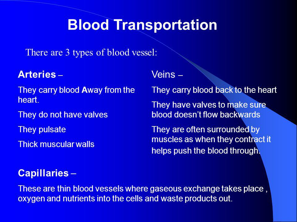 Blood Transportation There are 3 types of blood vessel: Arteries –